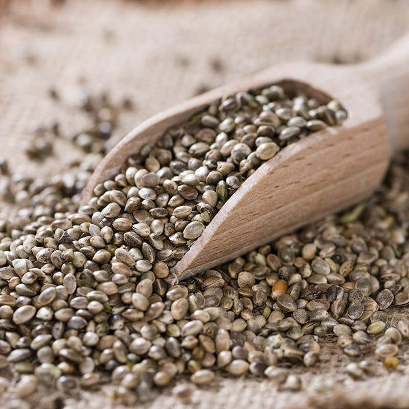 The Benefits of Hemp Seeds that are Really Be Good For You!